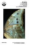 board-1-butterfly-art