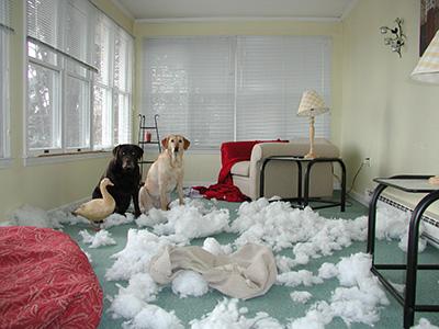 pet proof - Crypton Sofa